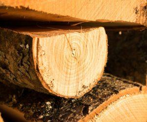 drewno-buk